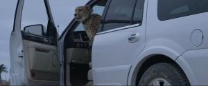cheetah-08072013